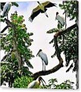 Tree Of Storks  Acrylic Print