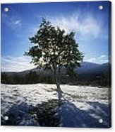 Tree On A Snow Covered Landscape Acrylic Print