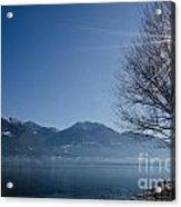 Tree On Lakefront Acrylic Print