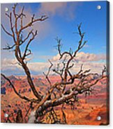 Tree Over Grand Canyon Acrylic Print