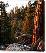 Tree Reflections Acrylic Print