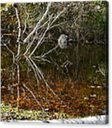 Tree Reflections Stoney Creek Acrylic Print