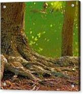 Tree Roots Acrylic Print