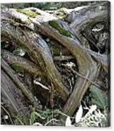 Tree Roots2 Acrylic Print