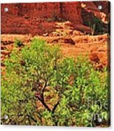 Tree Set Against Red Cliffs Acrylic Print