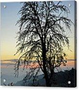 Tree Silhouette At Sunset 2 Acrylic Print by Bruno Santoro