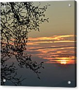 Tree Silhouette At Sunset Acrylic Print