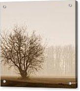 Tree Silhouette In Fog Acrylic Print