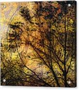 Tree Stamp Acrylic Print