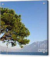Tree Standing Close To A Lake Acrylic Print