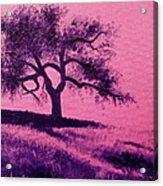 Tree Study 3 Acrylic Print
