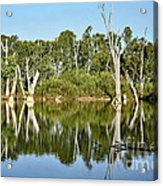 Tree Stumps In The River Acrylic Print by Kaye Menner