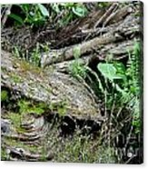 Tree Trunk And Ferns Acrylic Print