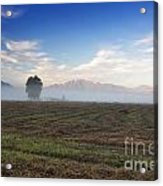Tree With Fog On The Field Acrylic Print