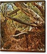 Tree Woods Acrylic Print