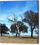 Treegedy Acrylic Print
