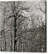 Trees And Hillside Acrylic Print