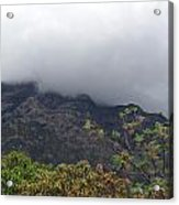 Trees And Leaves At The Base Of A Mountain With Clouds And Mist Covering The Top Acrylic Print