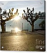 Trees And Sunset Acrylic Print