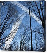 Trees And Trails Acrylic Print