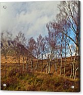Trees Below Stob Dearg Acrylic Print by Gary Eason