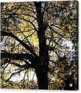 Trees During Autumn Acrylic Print