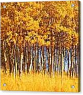 Trees In Autumn Acrylic Print
