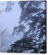 Trees In Fog 3  Acrylic Print