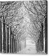 Trees In Lines Acrylic Print