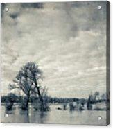 Trees In River Rhine Acrylic Print
