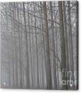 Trees In The Fog Acrylic Print