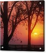 Trees In The Sunrise Acrylic Print