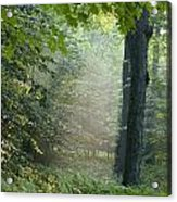 Trees In The Woods In The Early Morning Acrylic Print