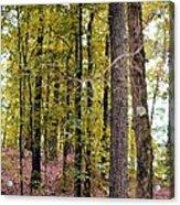 Trees Of Golden Hues Acrylic Print