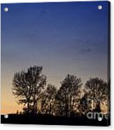 Trees On A Hill In Sunset Acrylic Print