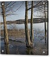 Trees On Flooded Riverbank No.1001 Acrylic Print