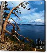Trees On The Crater Acrylic Print