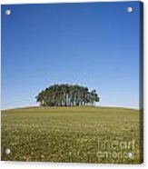 Trees On The Hill Acrylic Print