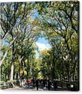 Trees On The Mall In Central Park Acrylic Print