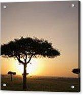 Trees On The Savannah With The Sun Acrylic Print