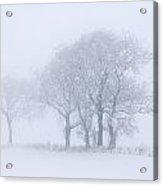 Trees Seen Through Winter Whiteout Acrylic Print