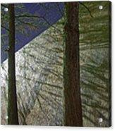 Trees Sky Shadow Acrylic Print