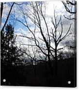 Trees Tell Stories Acrylic Print