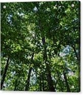 Trees To Heaven Acrylic Print