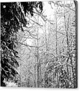 Trees Under The Snow Acrylic Print