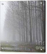 Trees With Fog And Snow Acrylic Print