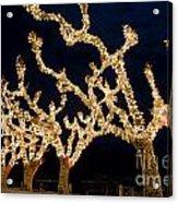Trees With Lights Acrylic Print