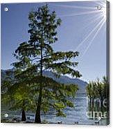 Trees With Sunbeam Acrylic Print