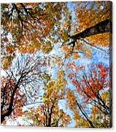 Treetops Acrylic Print by Elena Elisseeva