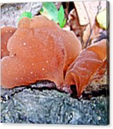 Tremella Mesenterica - Orange Brown Brain Fungus Acrylic Print
